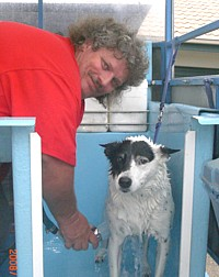 Aussie Pooch Mobile Dog wash and care specialist Kevin McFarlane hydrobathing a dog