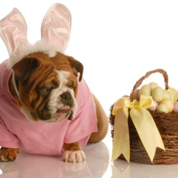 Chomping on chocolate can be fatal for your dog