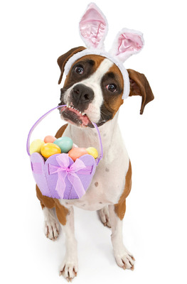 5 fun things to do with your dog this Easter