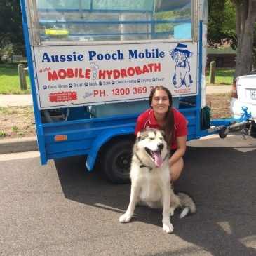 Pooch Pampering deluxe services for Cranbourne dogs