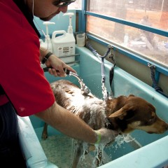 Aussie pooch mobile dog wash grooming franchise ph 1300 369 369 chris and konan solutioingenieria Gallery