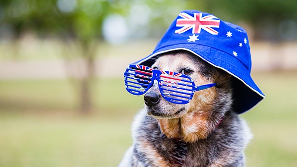 Spoil Your Dog This Australia Day