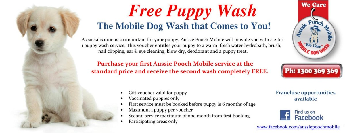 Puppies and dog washing with aussie pooch mobile free 2 for 1 puppy wash voucher solutioingenieria Choice Image