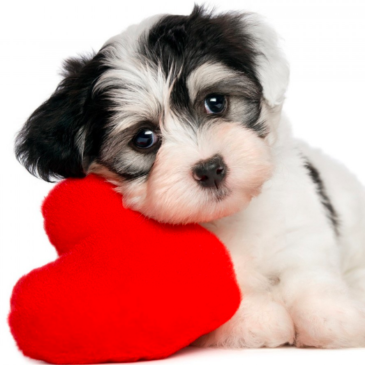 25 ways to show your dog you care!