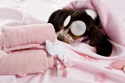 Aromacare Doggy Facial