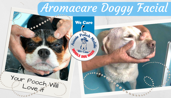 aromacare doggy facial aussie pooch mobile dog wash and grooming we care additional services