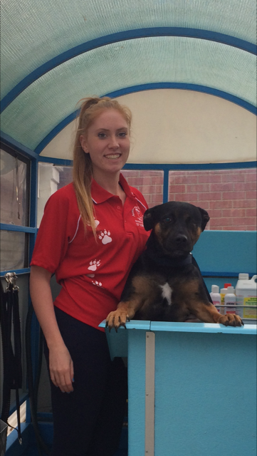 Pooch pampering services for Caroline Springs dogs