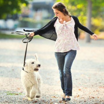 Things Dog Owners Should Have in Their Survival Kit