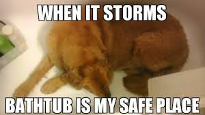 Storms and Dogs