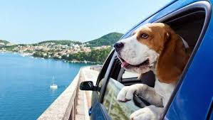 Travelling with Pets!!