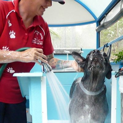 Your local dog wash groomers in Mt Ommaney
