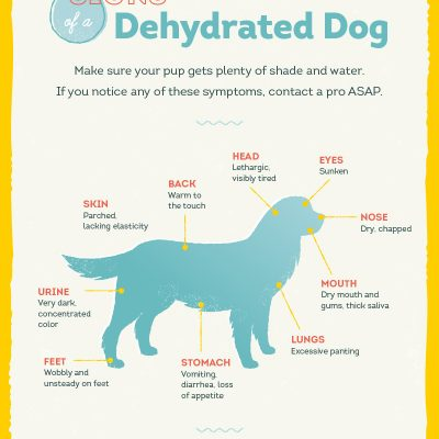 How to keep your dog hydrated this summer !!