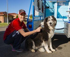 Brush dog hair deshedding shedding Aussie Pooch Mobile Mobie Hydrobath Easy Shed Service Dog Bath Hydrobath Brushing