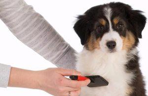 dog shedding shed brushing deshedding dog mobile hydrobath aussie pooch mobile puppy dog hair