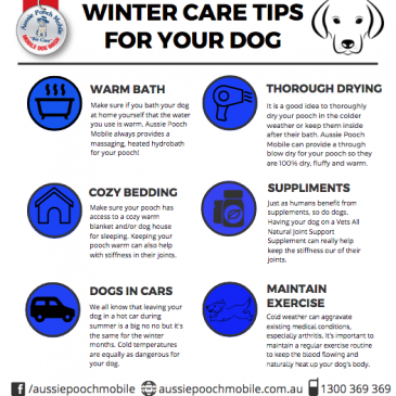 Winter Care Tips For Your Dog