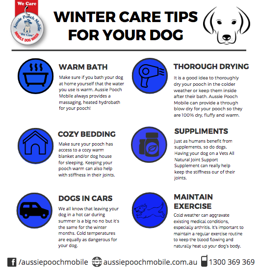 winter care tips washing mobile dog wash cold weather