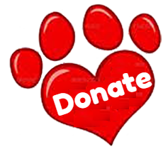red assistance dogs puppies special kids special needs children aussie pooch mobile fundraising empower donate now