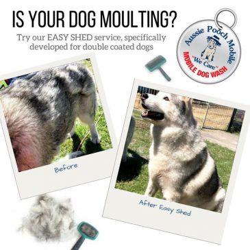 Dog Deshedding- Easy Shed Service