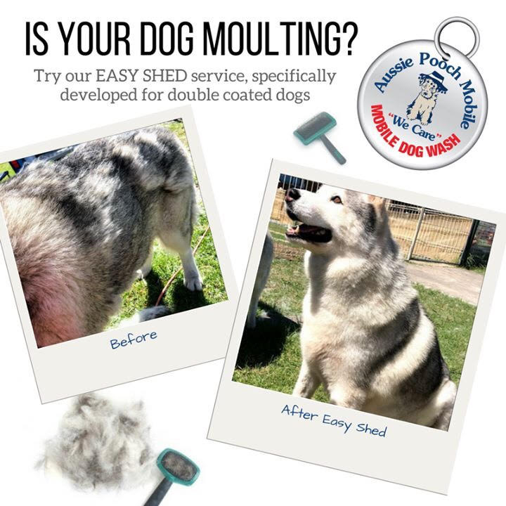 easy shed service deshedding dog aussie pooch mobile dog wash and grooming additional services