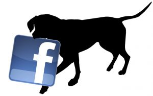 employment opportunities for over 55's facebook never retire job franchising mobile dog wash retire love what you do jobs with animals love dogs