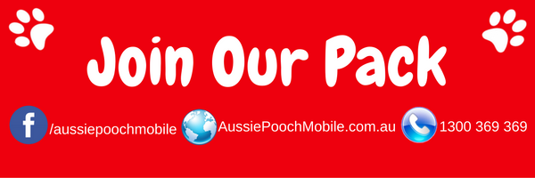 join our pack aussie pooch mobile dog wash and grooming franchising business love dogs