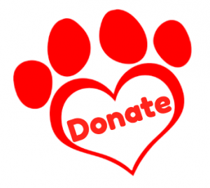 naming an assistance dog puppy aussie pooch mobile we care vareity empower donate