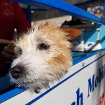 mpw aussie pooch mobile dog wash and grooming franchise franchising business
