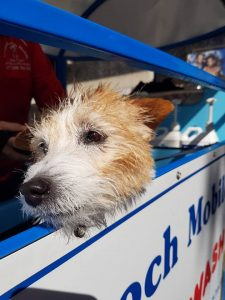 top advantages of franchising mpw aussie pooch mobile dog wash and grooming franchise franchising business