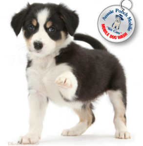 aussie pooch mobile tag franchising working with animals dogs