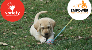 naming an assistance dog puppy empower aussie pooch mobile fundraising