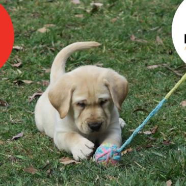 Name an Assistance Dog Puppy