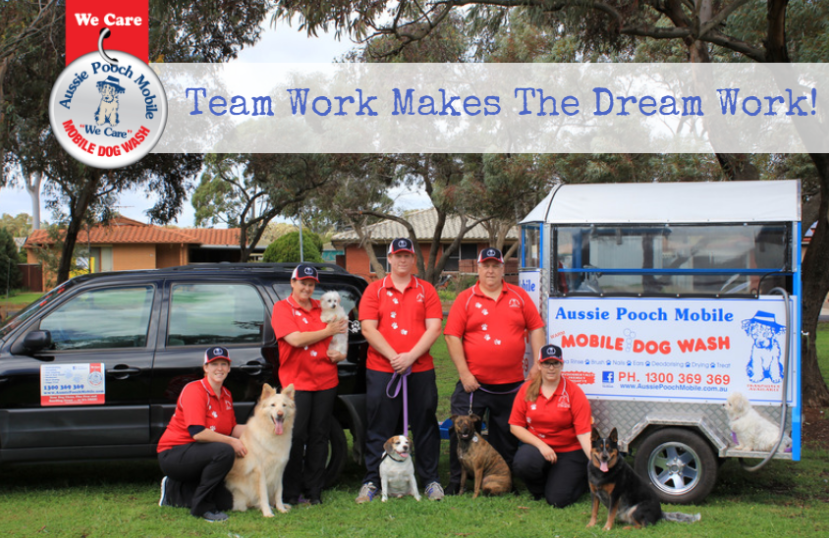 team work we care top franchise best rated franchise aussie pooch mobile mobile dog grooming