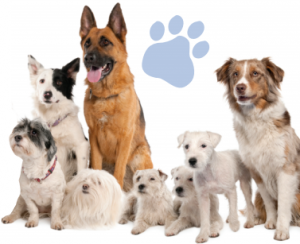 dog massage pooch individual additional services menu aussie pooch mobile pooch massage