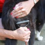brushing grooming and trimming additional services aussie pooch mobile dog wash we care pet care