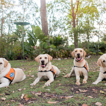 Discount for all Service Dogs Australia wide – we care