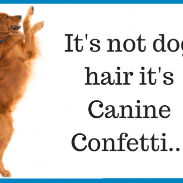 Reduce Dog Shedding with these 6 easy tips