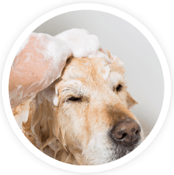 Aussie pooch mobile dog wash grooming franchise ph 1300 369 369 aromacare pooch massage additional services aussie pooch mobile dog wash and grooming we care pet care solutioingenieria Images