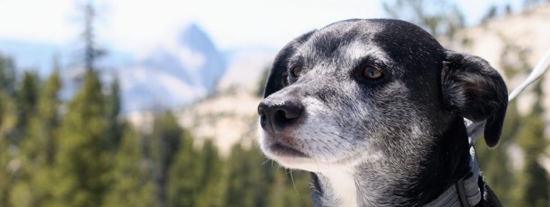 old dog new tricks franchise senior dog header