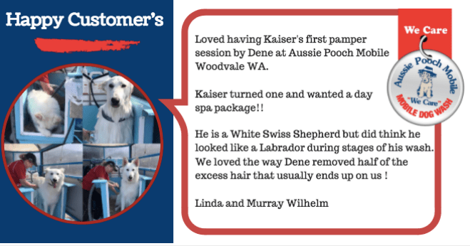 kaiser loves dog wash and groom