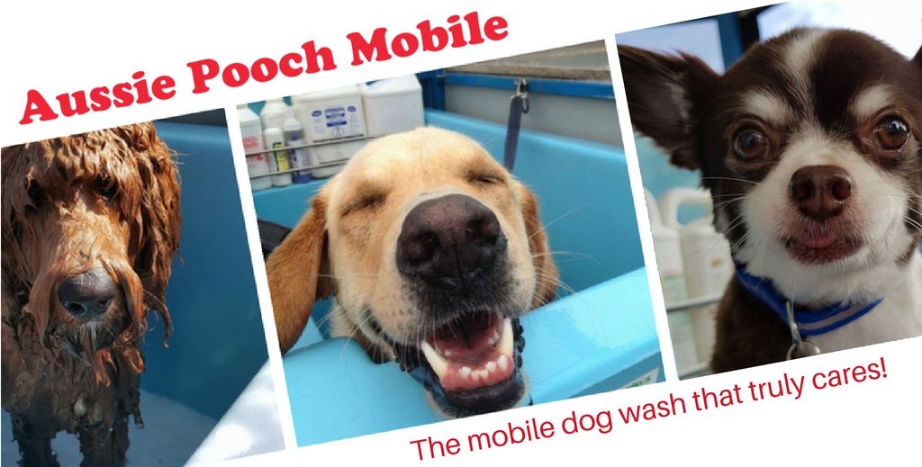 mount barker local groomer dog groomer mobile dog washing