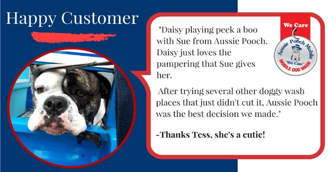 daisy loves dog wash