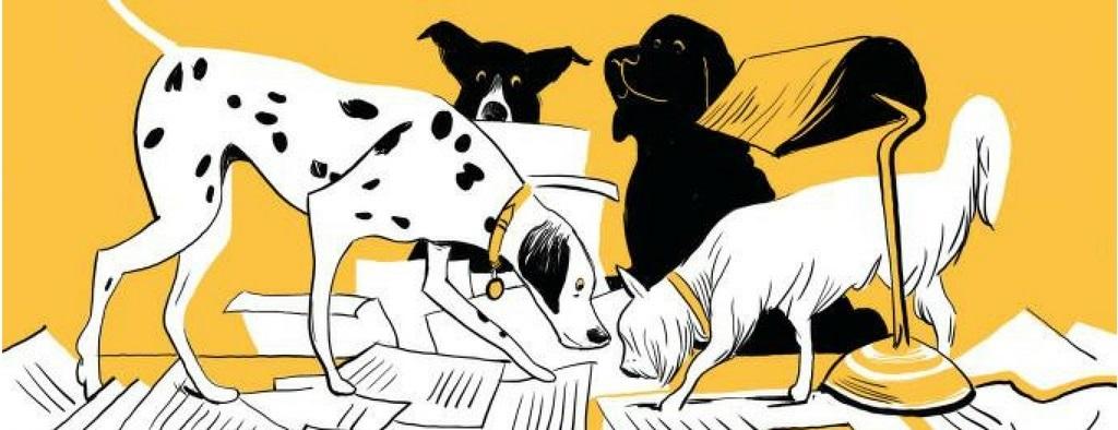 advice on pet care pooch news header