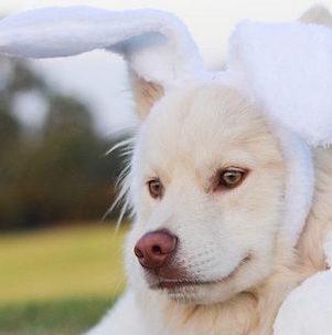 Plastic Easter egg hunt for your dog
