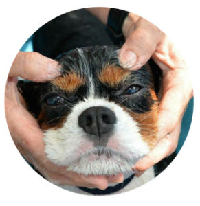 Aussie Pooch Mobile Dog Wash & Grooming Franchise Ph 1300 369 369