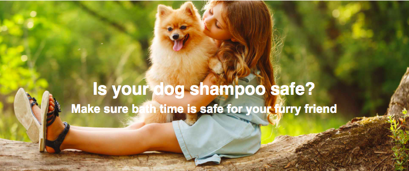 safe dog shampoo solutions mobile dog wash