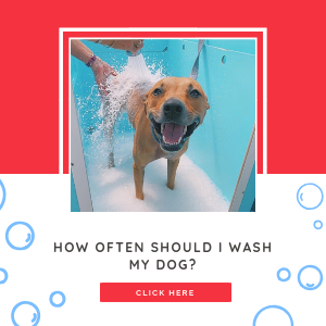 How often should I wash my dog?
