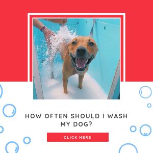 How often should I wash my dog?