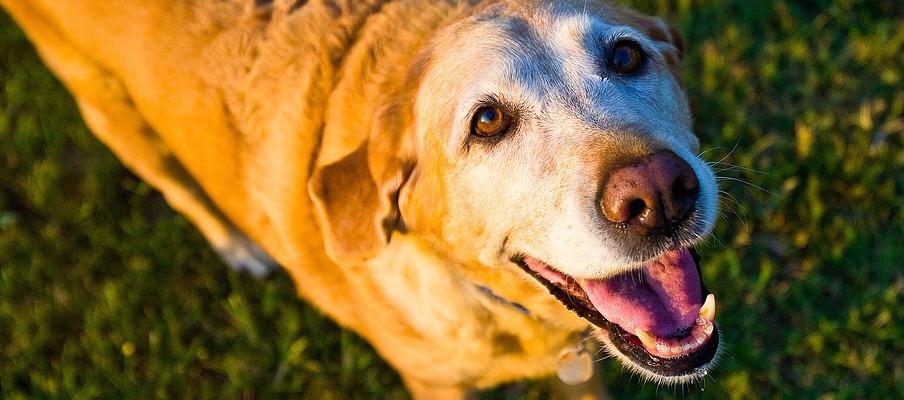 pet loss petloss petcare mobiledoggroomer dogwash