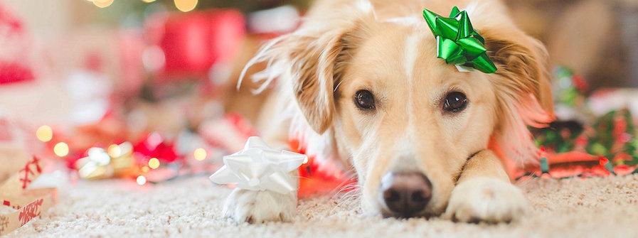 pooch presents dog gift ideas dog presents