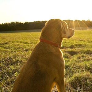 Natural dog food and pet care advice